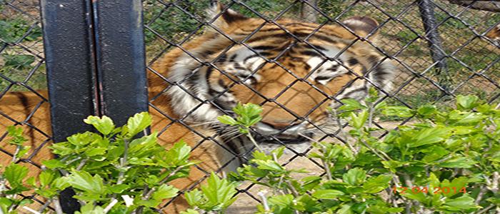 G.B. Pant Zoo